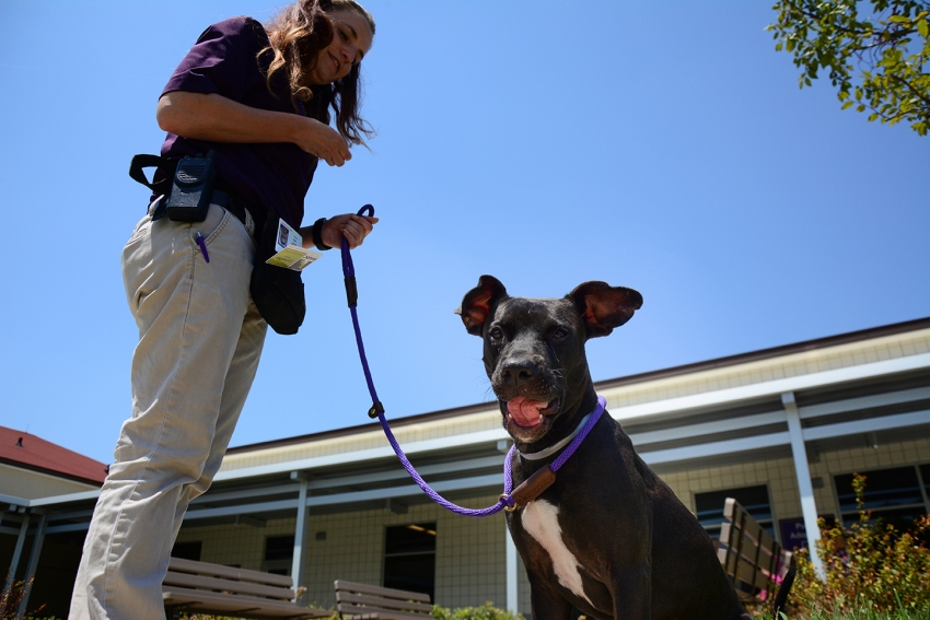Lynette Bodmer, a BARC animal care technician, takes one of BARC's dogs for a walk in the new adoption center courtyard.