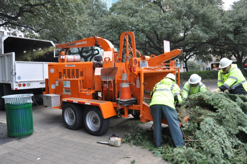 Houston Parks and Recreation Department employees feed the 65-foot City Hall Holiday tree into a wood chipper to create mulch that will nourish Houston soil for months to come.