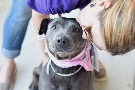 Sniffles and Sneezes Program cures shelter blues for sick pets