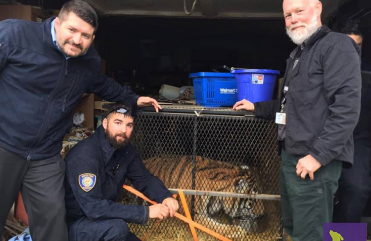 BARC animal control employees Jarrad Mears, Chris Dunn and Chris Glaser helped rescue a juvenile male tiger found in an abandoned Houston home.