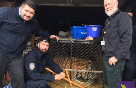 Tiger rescue mission highlights strength in teamwork